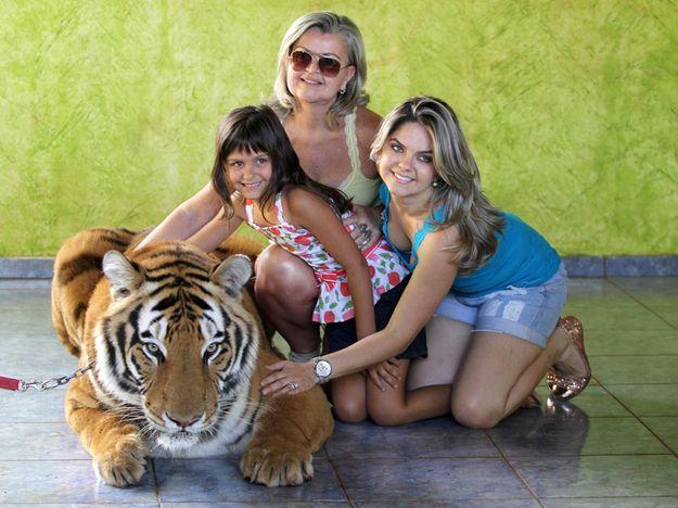 Тигр в качестве домашнего животного