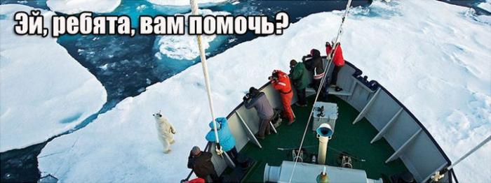 Комикс с полярным медведем