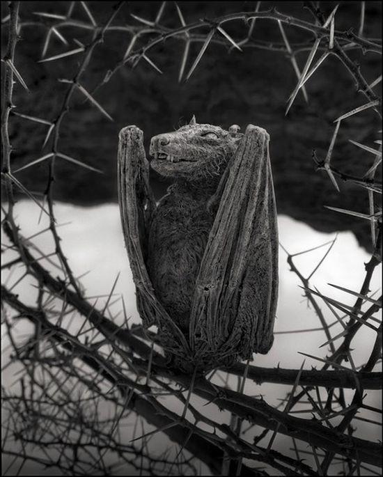 Каменые животные с озера Натрон