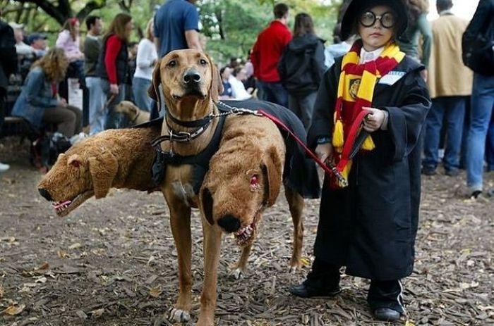 Дети в прикольных костюмах для Хэллоуина