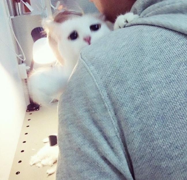 Кот в парикмахерской