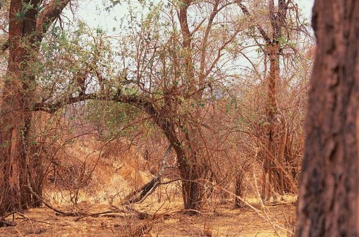 Фотографии дикой природы Арта Вульфа