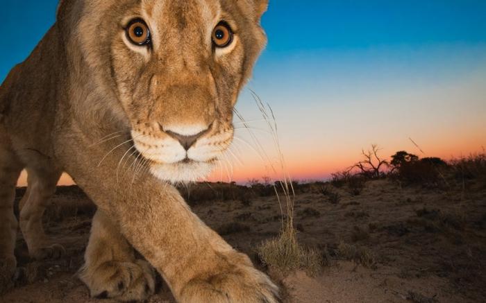 Красота дикой природы Африки