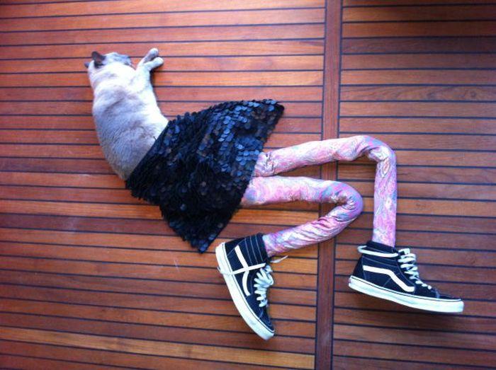 Кошка в колготках