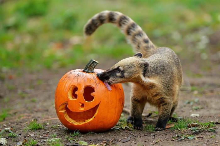 Животные и Хэллоуин