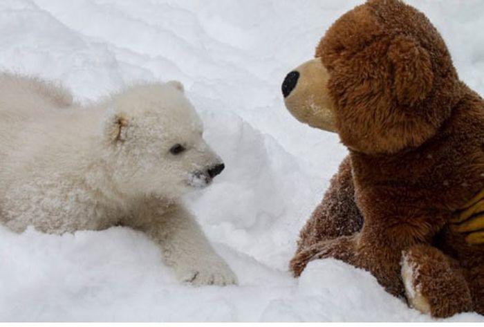 Любопытный медвежонок