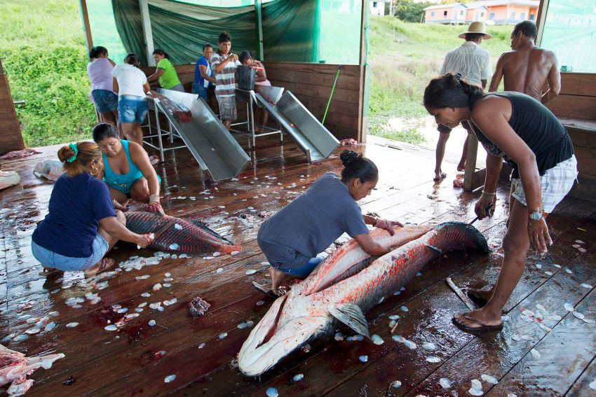 рыбалка на амазонке племенами