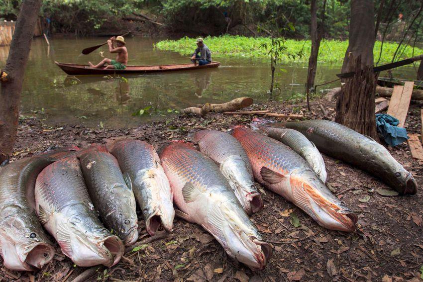 рыбалка в амазонии