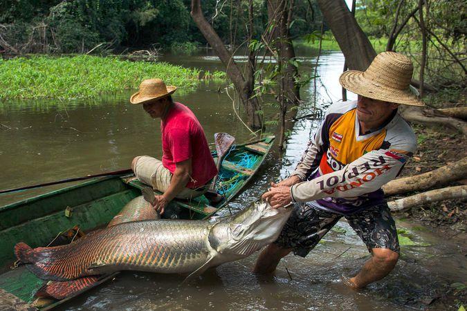 рыбалка на реке понга