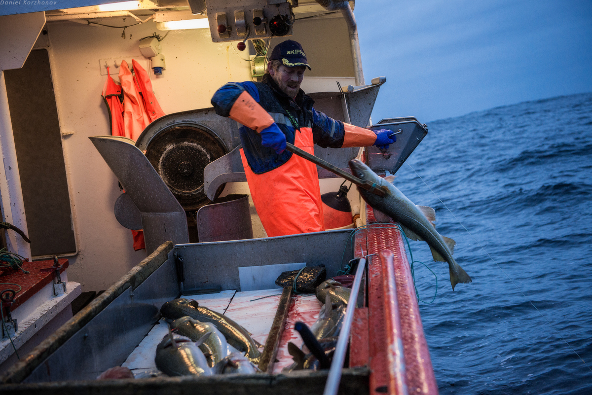 как ловить рыбу треска