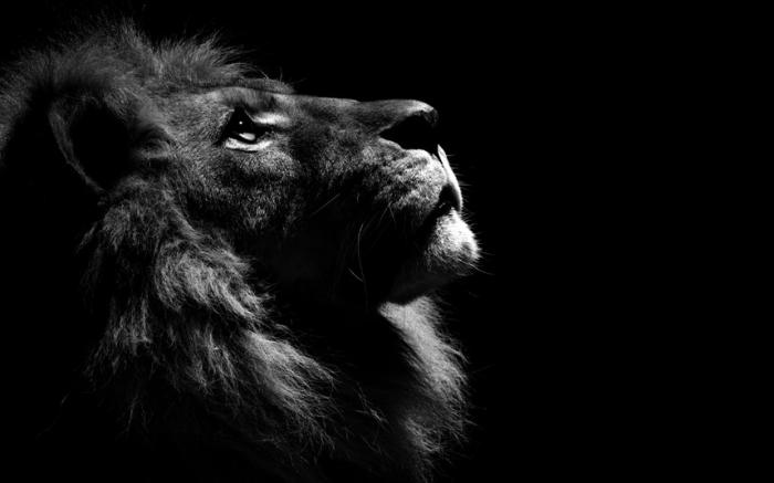 Черно белые фотографии животных