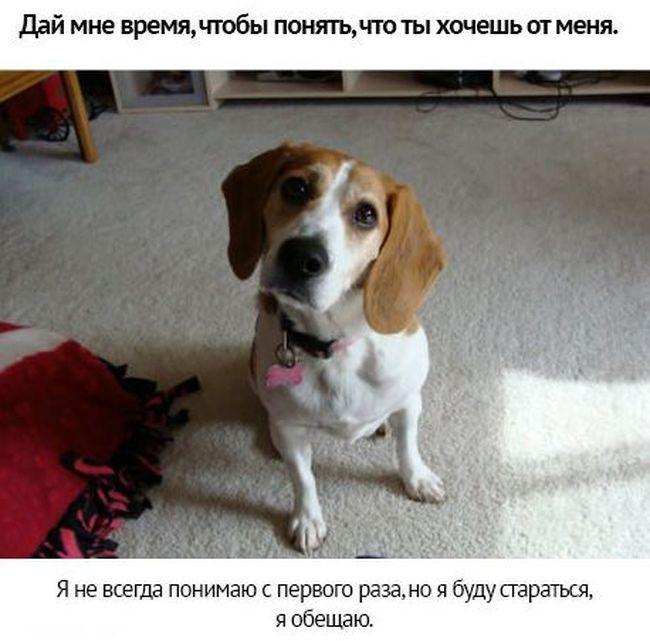 С собакой по жизни
