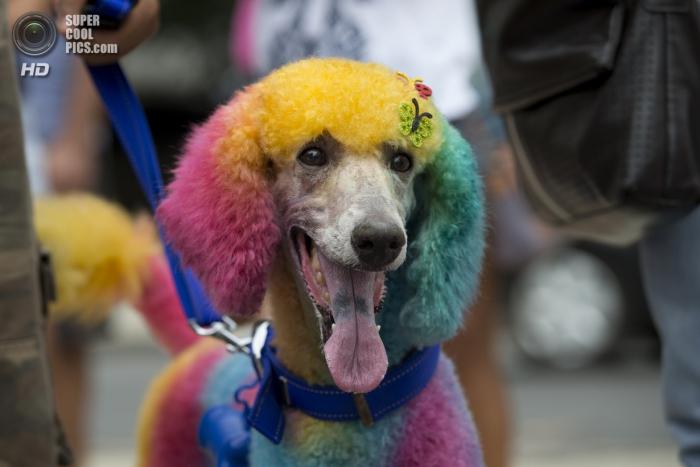 Собачий карнавал