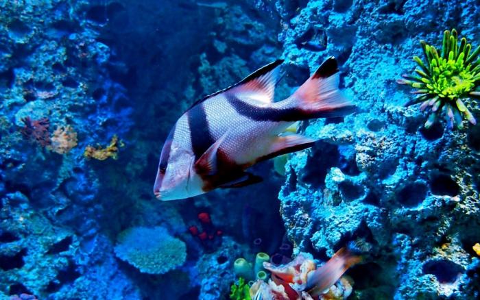 крупнейший океанариум на планете