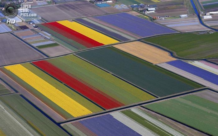 Тюльпановые поля с высоты птичьего полета
