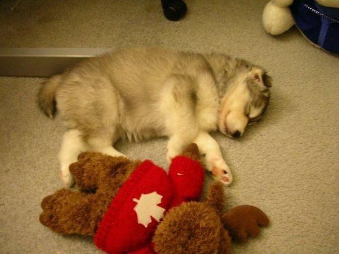 Собака с повадками кошки