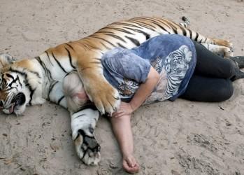 Жизнь с тиграми