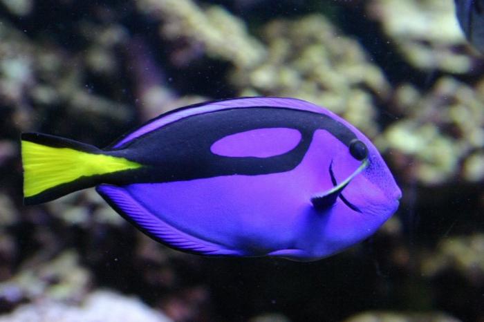 A maioria dos peixes
