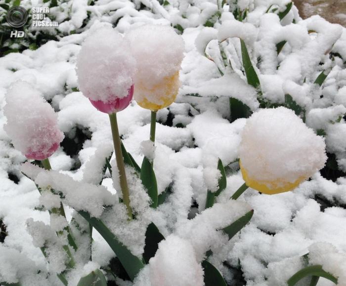 Весенний снегопад в США