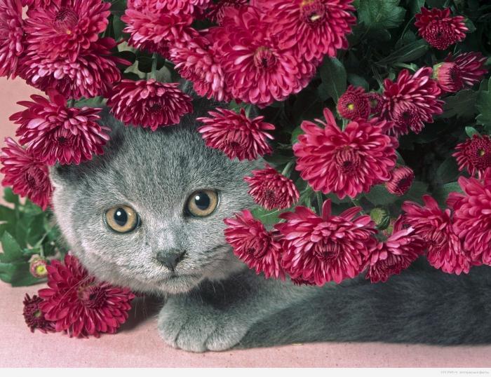 9 жизней кошек