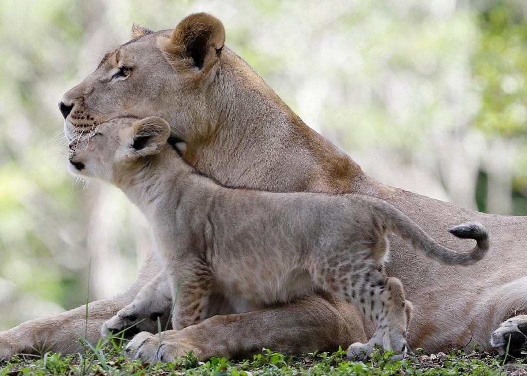 Скелетов, картинки мамы с детьми животные