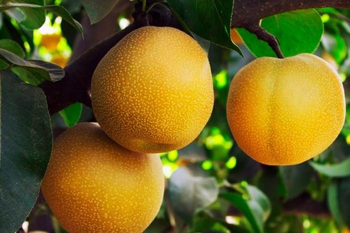 Самые необычные фрукты и овощи - 5