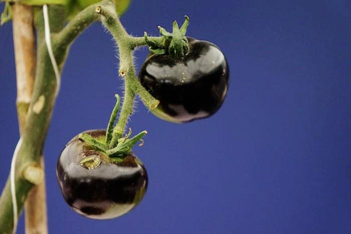 Самые необычные фрукты и овощи - 1