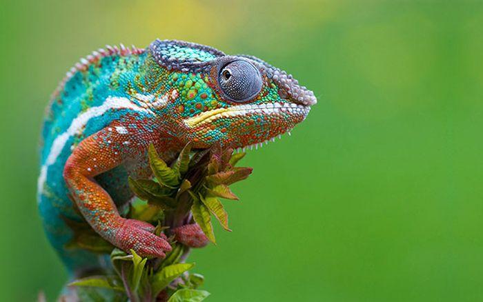 Красивые фотографии с животными - 1