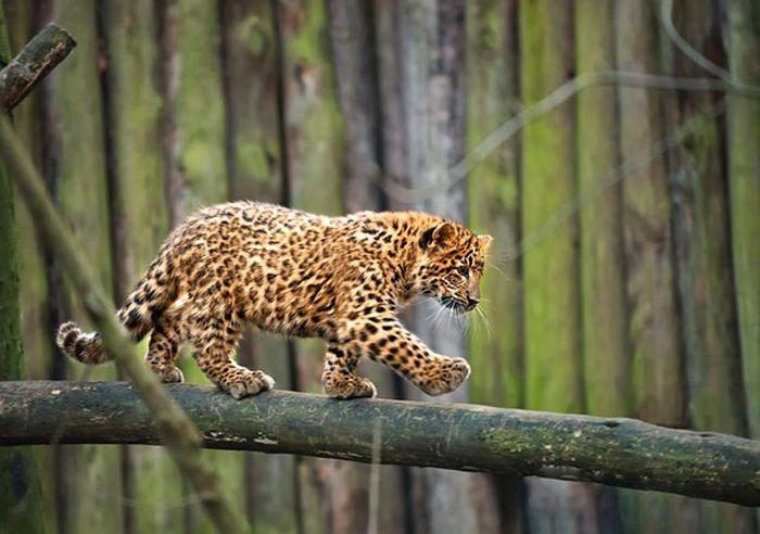Красивые фотографии с животными - 6