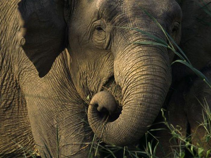 Красивые фотографии с животными - 29