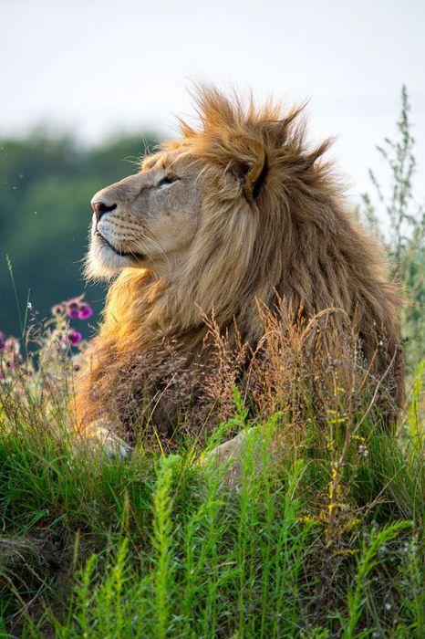 Красивые фотографии с животными - 20