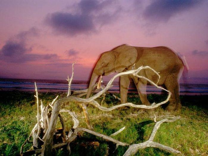 Красивые фотографии с животными - 32