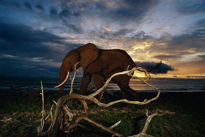 Красивые фотографии с животными - 40
