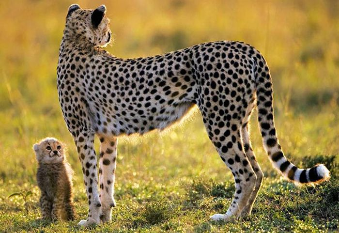 Красивые фотографии с животными - 41