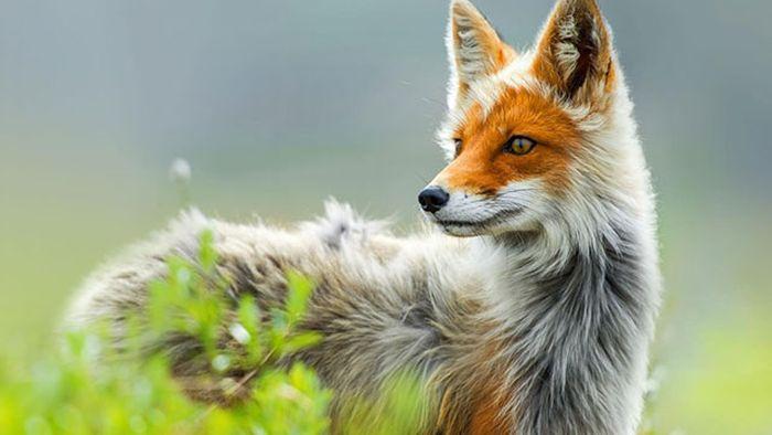 Красивые фотографии с животными - 11