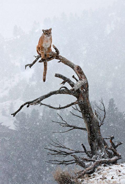 Красивые фотографии с животными - 15