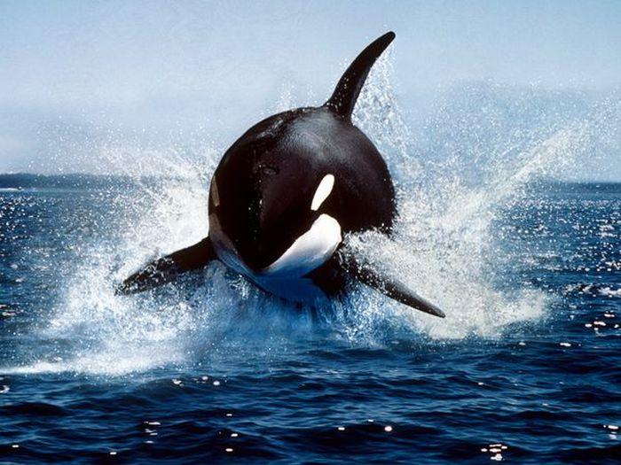 Красивые фотографии с животными - 33