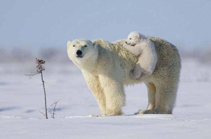 Красивые фотографии с животными - 8