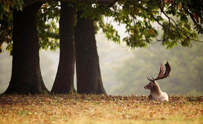 Красивые фотографии с животными - 22