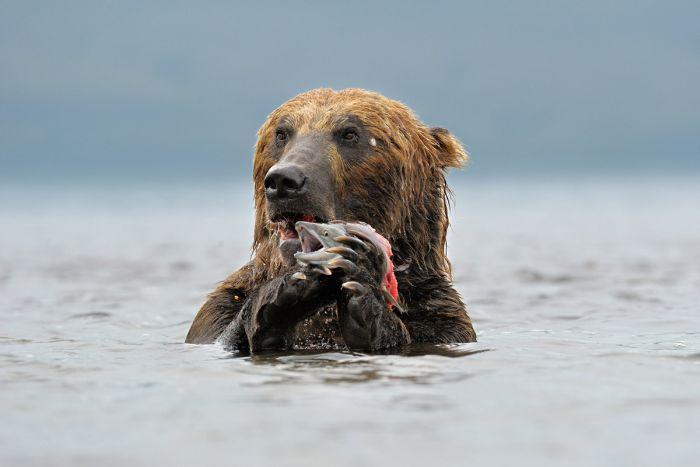 Красивые фотографии с животными - 26