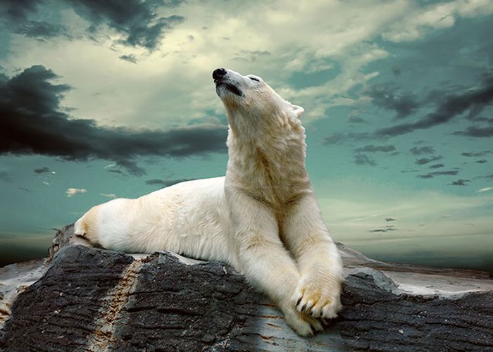 Красивые фотографии с животными - 24