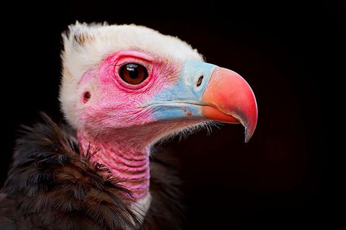 Красивые фотографии с животными - 12