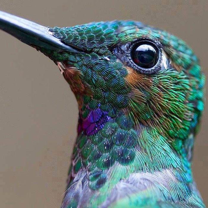 Красивые фотографии с животными - 10