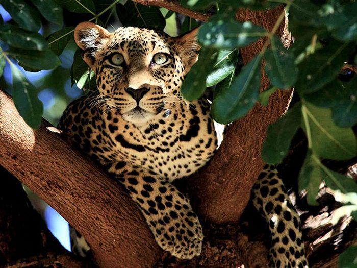 Красивые фотографии с животными - 21