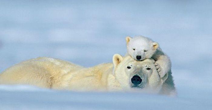 Красивые фотографии с животными - 36