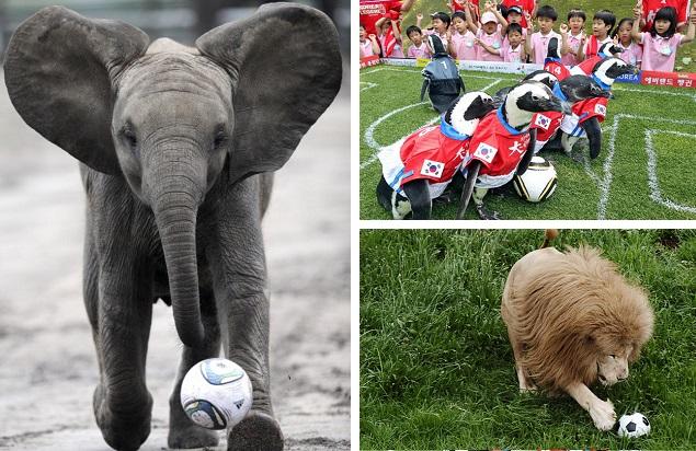 Животные играющие в футбол