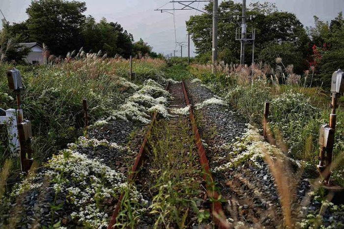 Мертвый город вокруг Фукусима-1 - 4