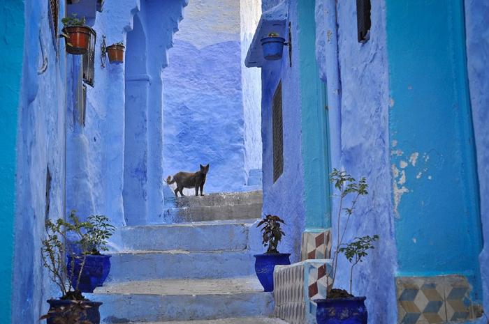 Прогулка по синему городу - 2