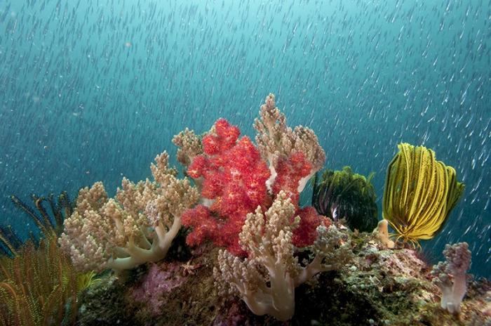 подводный мир Энди Лернера