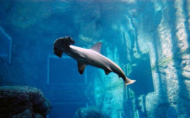 Самые удивительные аквариумы в мире